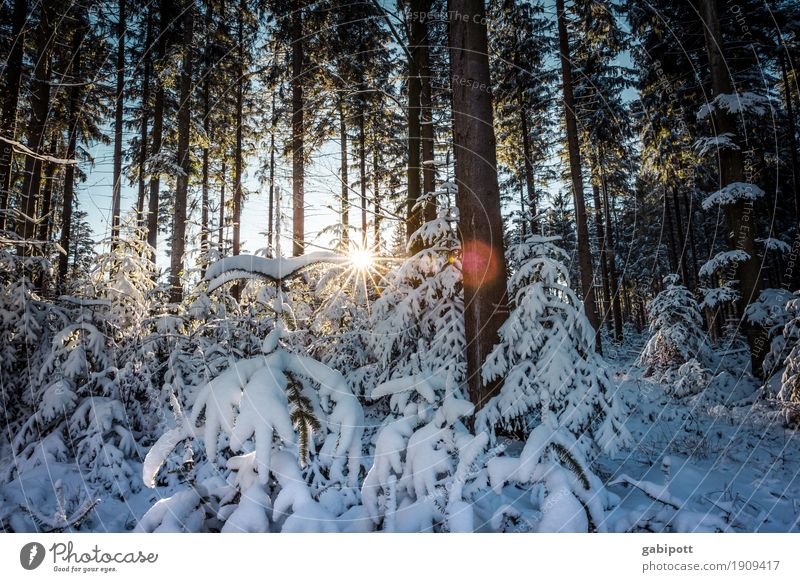 After the snow Contentment Senses Calm Leisure and hobbies Vacation & Travel Tourism Trip Winter Snow Winter vacation Mountain Hiking Nature Landscape Climate