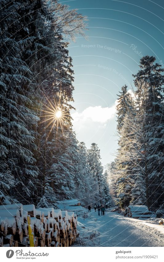 Sky Nature Vacation & Travel Landscape Winter Forest Mountain Life Lifestyle Environment Cold Healthy Snow Tourism Trip Snowfall