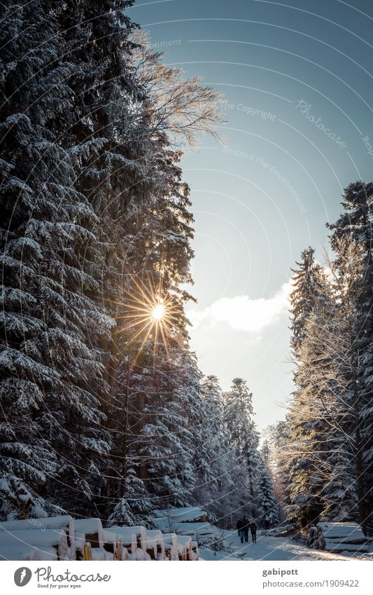 Nature Vacation & Travel Plant Sun Tree Landscape Calm Winter Forest Mountain Cold Life Snow Movement Tourism Leisure and hobbies