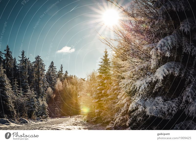 WinterBlackForest Life Well-being Contentment Senses Calm Vacation & Travel Tourism Trip Adventure Snow Mountain Hiking Landscape Plant Sky Beautiful weather
