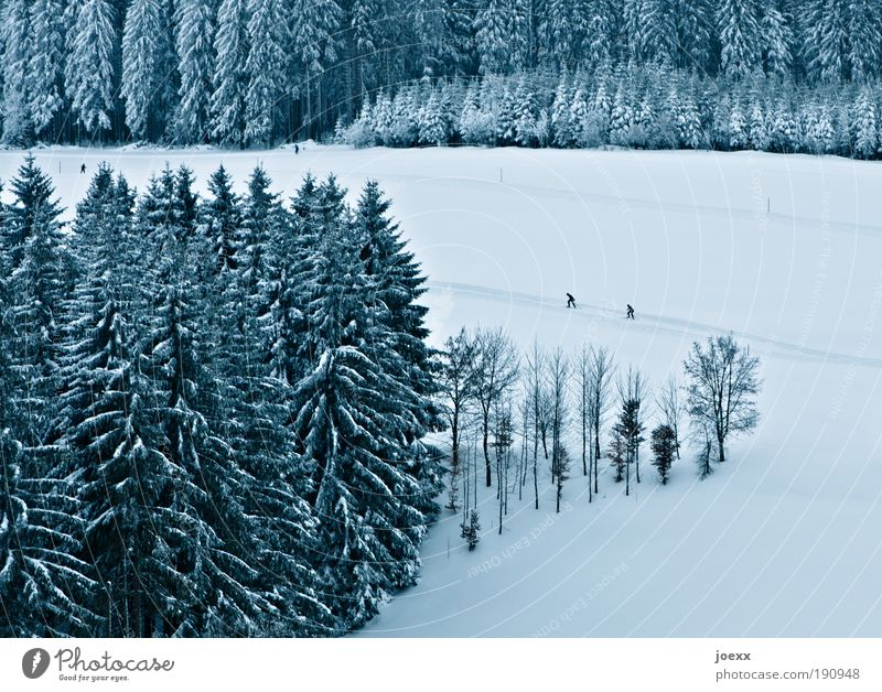 Human being Nature Tree Winter Forest Landscape Sports Snow Ice Frost Snowscape Sporting event Winter sports Pursue Ambitious Foot race