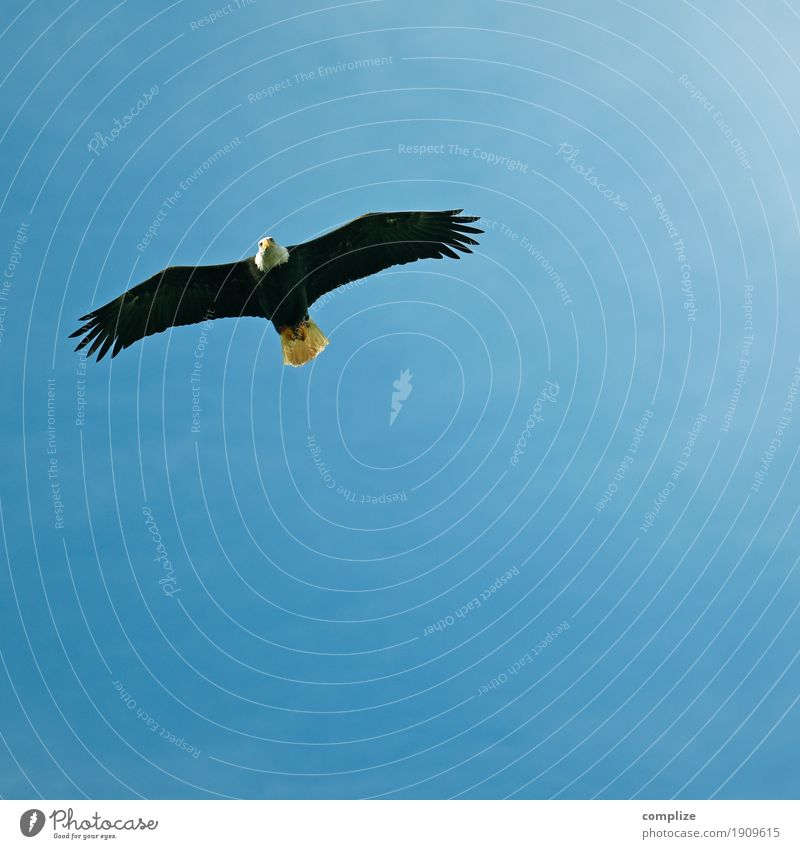 Nature Sun Animal Far-off places Environment Bird Flying Air Wild animal Vantage point Climate Elements Hunting Expedition Eagle Bird of prey