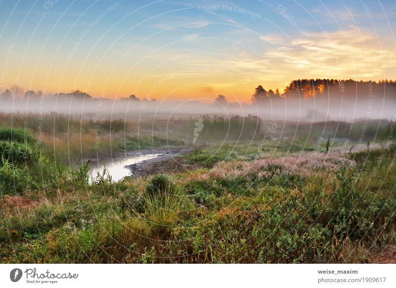 Foggy summer meadow in the morning. Misty dawn Sky Nature Vacation & Travel Summer Green Tree Landscape Forest Yellow Meadow Grass Tourism Trip Fresh