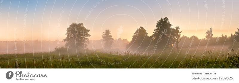 Summer misty dawn on the bog. Foggy swamp in the morning Sky Nature Vacation & Travel Blue Green Tree Landscape Forest Warmth Meadow Grass Freedom Lake Tourism