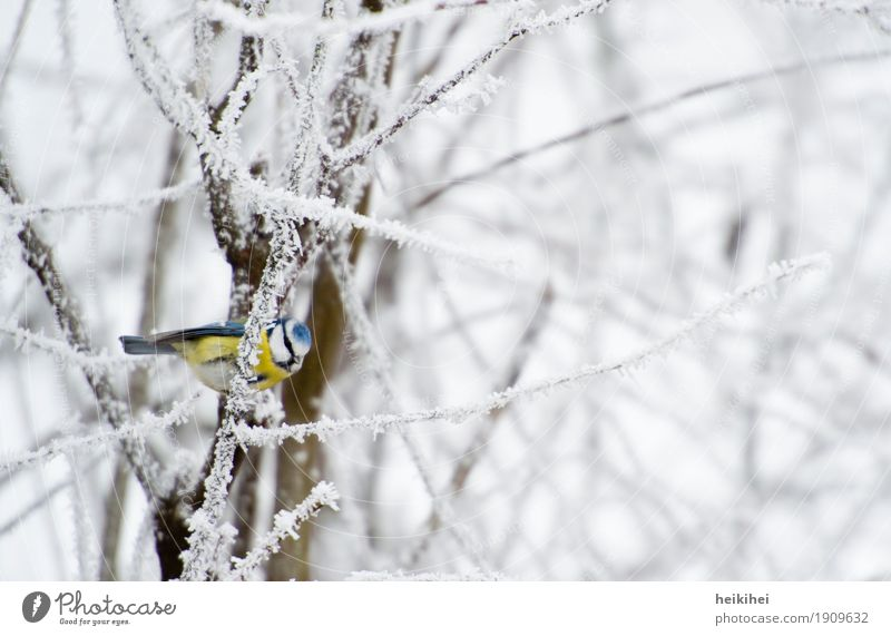 Nature Plant Blue White Tree Animal Winter Forest Black Environment Cold Yellow Snow Garden Brown Bird
