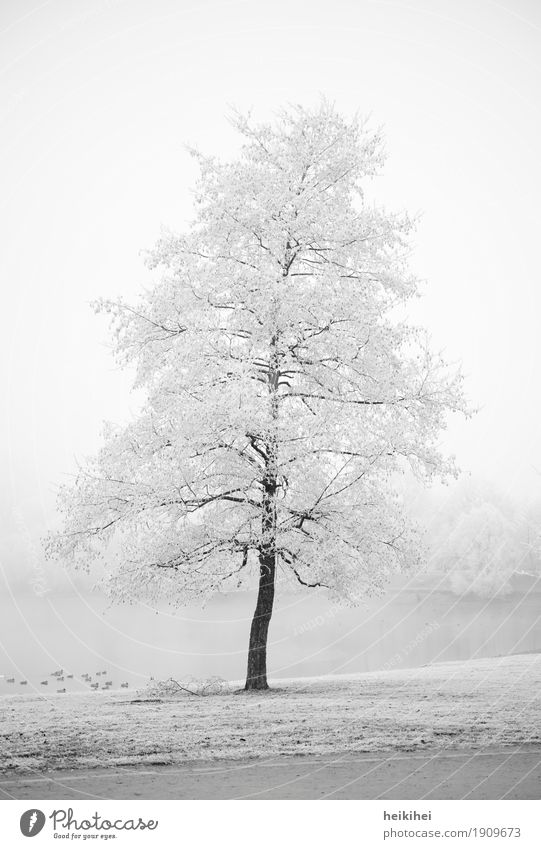 Winter wonderland Environment Nature Landscape Plant Earth Water Sky Horizon Fog Ice Frost Snow Tree Garden Park Meadow Coast Cool (slang) Cold Brown Gray Black