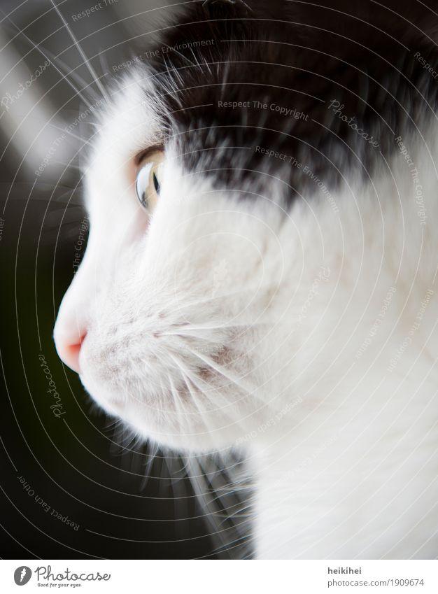 Cat Beautiful White Relaxation Animal Black Yellow Lighting Feminine Happy Think Illuminate Esthetic To enjoy Authentic Cute