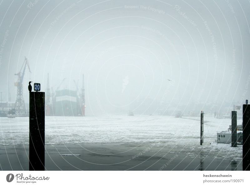 Winter Loneliness Cold Gray Sadness Ice Bird Wait Hamburg Industry Logistics River Harbour Craft (trade) Economy Trade