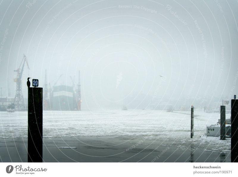Winter Loneliness Cold Gray Sadness Ice Bird Wait Hamburg Industry Logistics River Harbour Craft (trade) Economy Trade