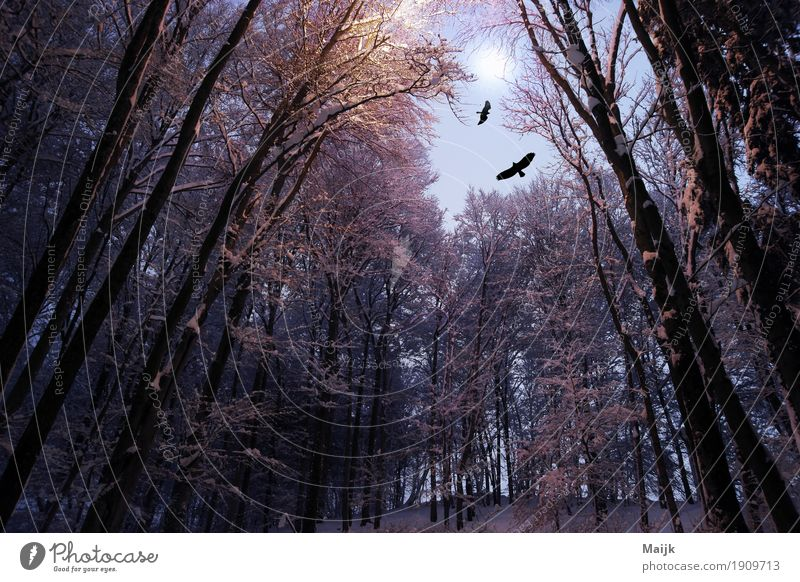 After Midnight Composing Digital photography Environment Nature Landscape Air Night sky Moon Winter Tree Forest Hill Bird 2 Animal Loneliness Mystic Freedom