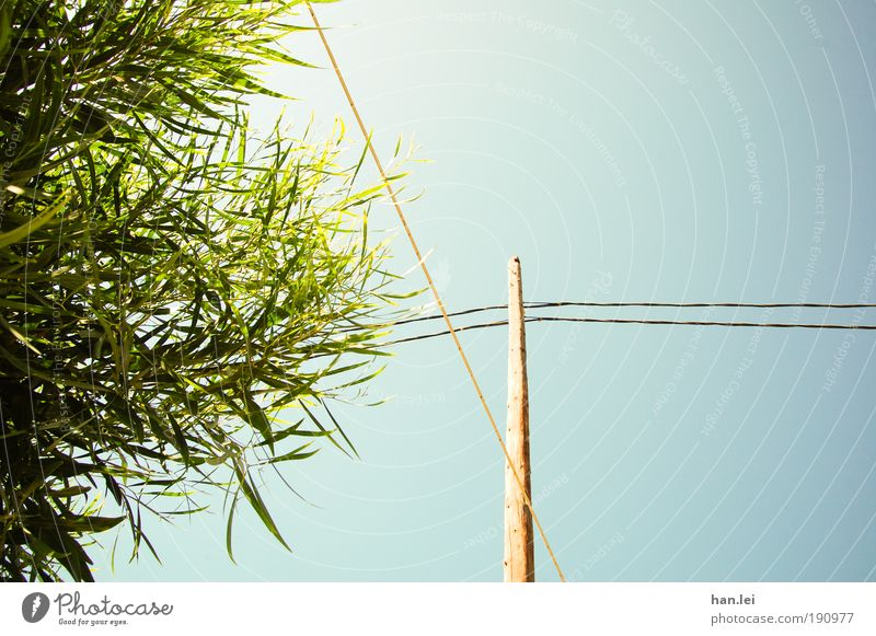Tree Green Blue Plant Leaf Wood Cable Bushes Connection Beautiful weather Electricity pylon Connect Interlaced Blue sky Cloudless sky