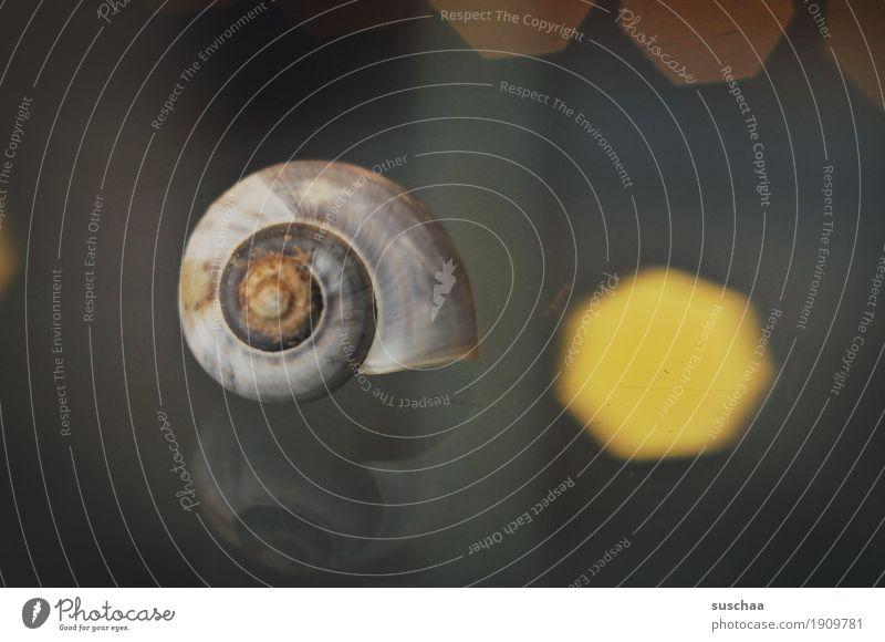 habitation Snail Snail shell Domicile Living or residing Glass table Reflection Light Lime Spiral Round