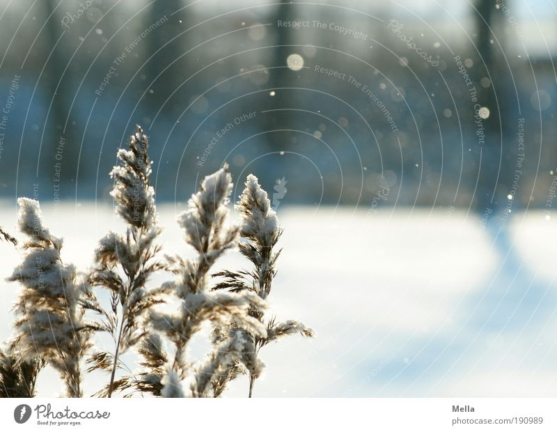 Nature Plant Winter Calm Cold Snow Grass Snowfall Landscape Air Ice Weather Environment Frost Climate Idyll