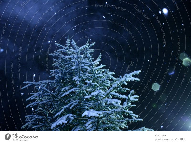 Blue Beautiful White Tree Calm Winter Forest Snow Snowfall Weather Ice Fog Frost To fall Christmas tree Fir tree
