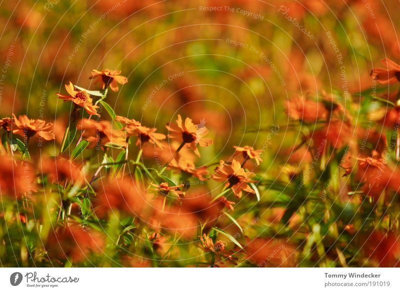 Nature Plant Beautiful Colour Summer Flower Environment Spring Blossom Moody Orange Growth Illuminate Fresh Crazy Creativity