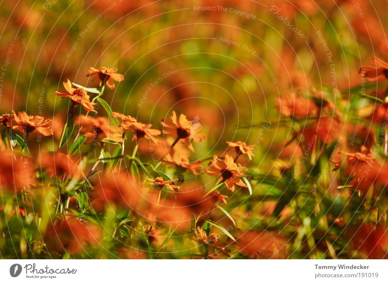 Nature Plant Beautiful Colour Summer Flower Environment Spring Blossom Moody Orange Growth Illuminate Fresh Crazy Creativity