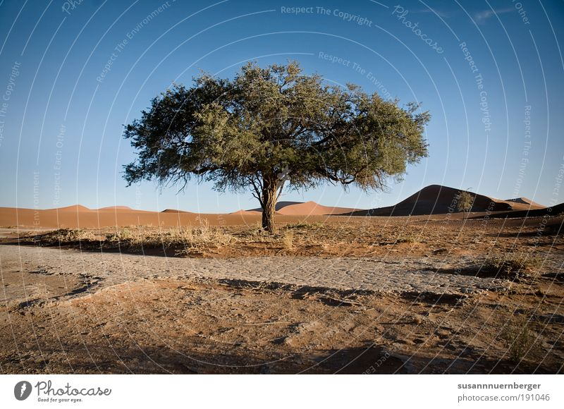 Nature Tree Plant Summer Warmth Sand Landscape Contentment Environment Africa Desert Elements Namibia Cloudless sky