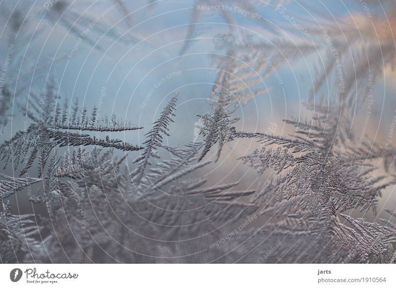 icy Winter Beautiful weather Ice Frost Glass Freeze Cold Natural Nature Frostwork Ice crystal Glass ball Colour photo Exterior shot Close-up Detail