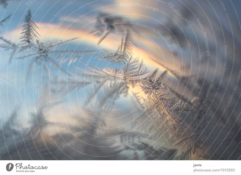 on a winter morning.... Sky Clouds Sunrise Sunset Winter Beautiful weather Glass Cold Natural Serene Calm Nature Frostwork Ice crystal Colour photo