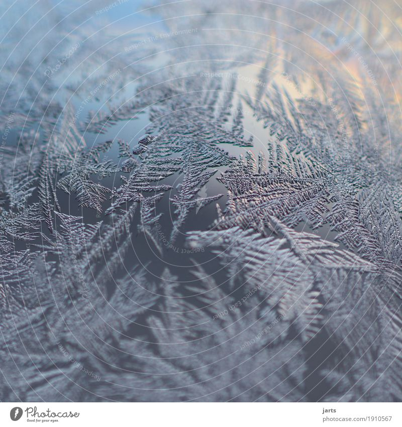 frost Sky Winter Beautiful weather Ice Frost Glass Fantastic Cold Natural Nature Frostwork Ice crystal Glass ball Colour photo Exterior shot Close-up Detail