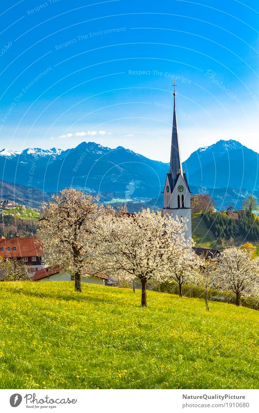 fraxern Vacation & Travel Tourism Far-off places Summer Summer vacation Architecture Culture Nature Sunlight Spring Beautiful weather Tree Flower Grass Blossom