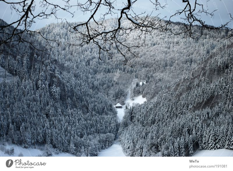 lonesome boor Nature Landscape Plant Winter Snow Tree Forest Mountain Far-off places Natural Black White Calm Dream Longing Loneliness Independence Environment