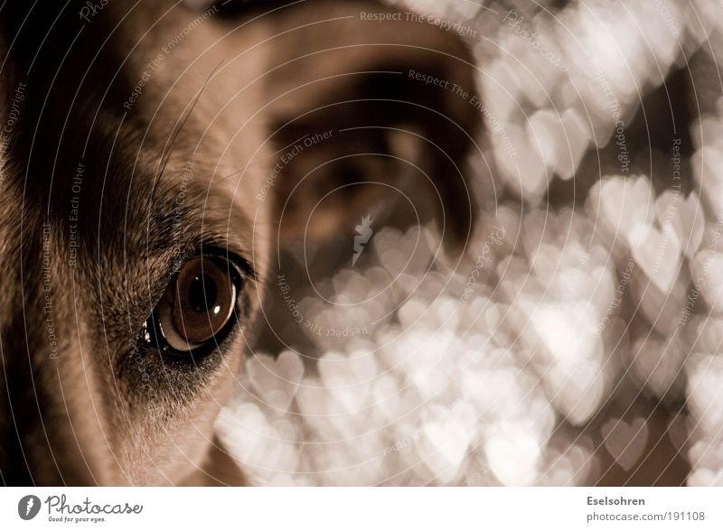 Animal Emotions Dog Metal Contentment Heart Animal face Pelt Trust Sign Blur Pet Love of animals Grateful