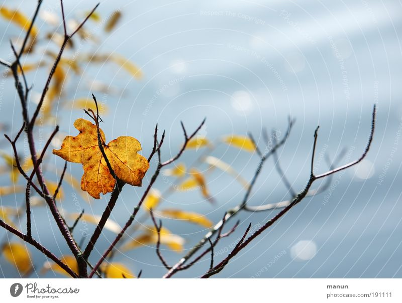 Nature Old Tree Leaf Loneliness Calm Relaxation Death Life Autumn Park Contentment Idyll Beautiful weather Branch Lakeside