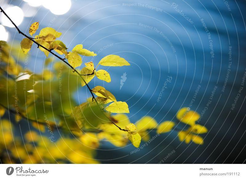 Nature Blue Water Relaxation Leaf Calm Yellow Life Autumn Park Contentment Bushes Joie de vivre (Vitality) Beautiful weather Break Lakeside