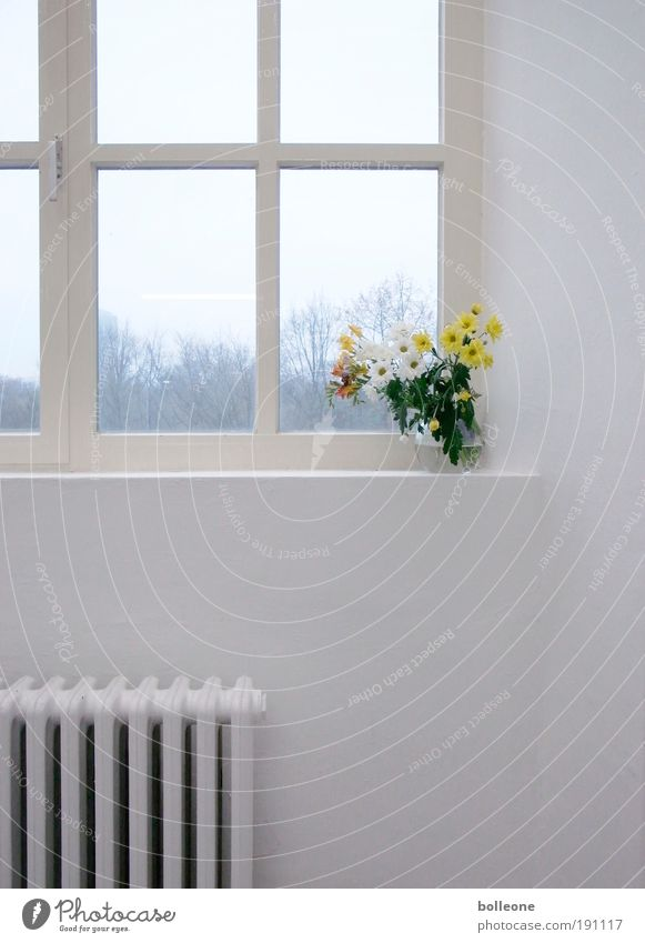 White Flower Plant Loneliness Colour Wall (building) Style Window Wall (barrier) Art Architecture Design Esthetic Decoration Interior design