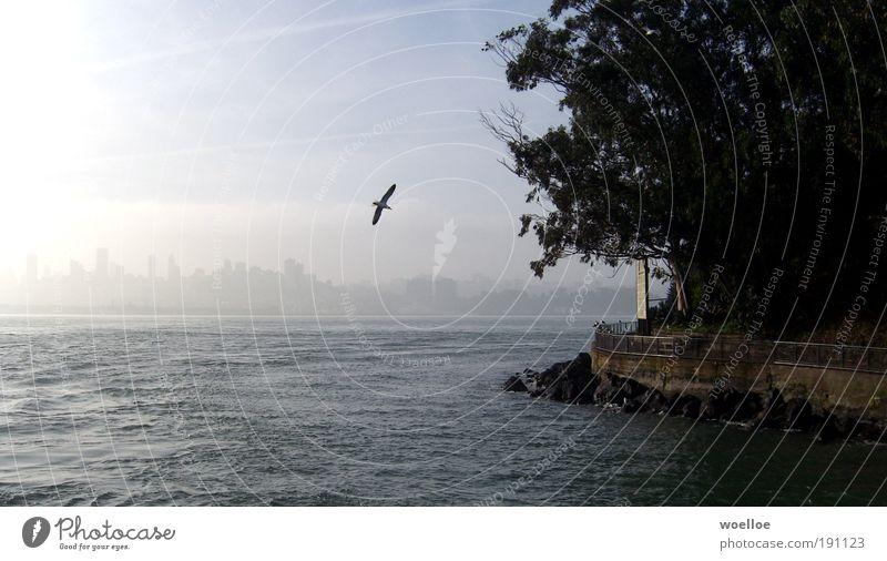 San Francisco Idyll Water Tree Coast Ocean Island Alcatraz USA North America Port City Skyline Penitentiary Wall (barrier) Wall (building) Animal Bird Wing