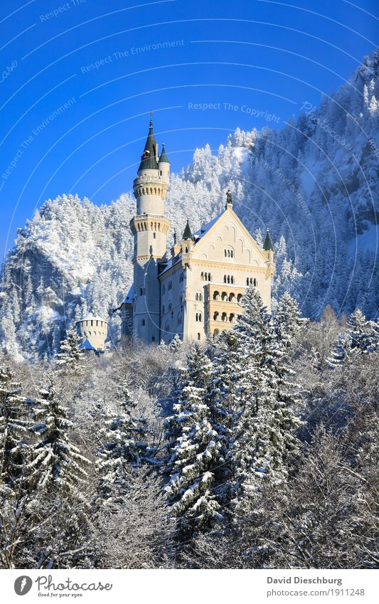 Neuschwanstein Castle Vacation & Travel Tourism Trip Sightseeing Snow Winter vacation Mountain Nature Landscape Cloudless sky Beautiful weather Tree Forest