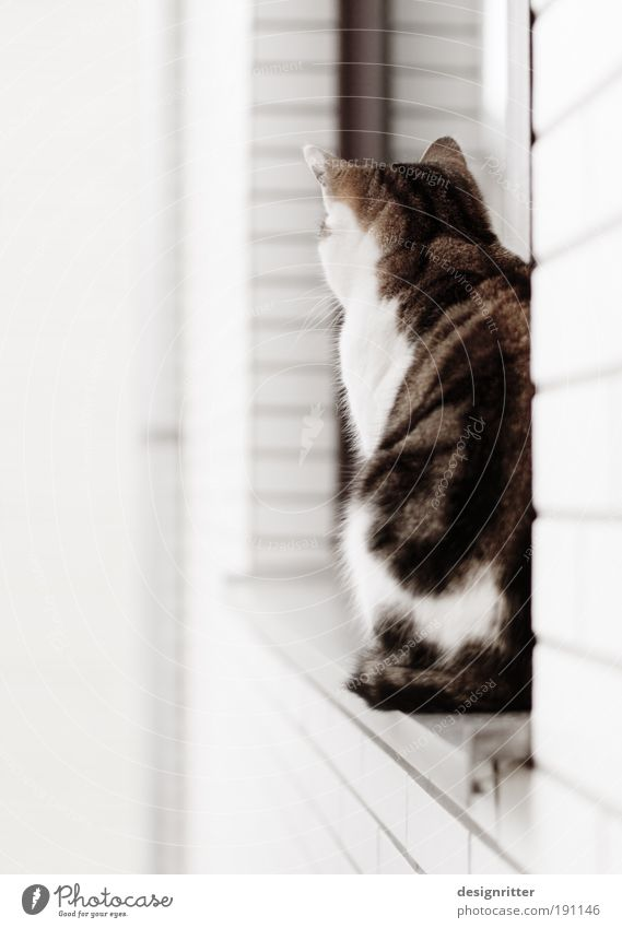 sit and wait Wall (barrier) Wall (building) Window Pet Cat 1 Animal Observe Feeding Sit Dream Sadness Wait Esthetic Beautiful Wild Soft Trust Watchfulness