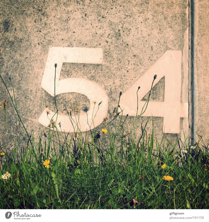 xenon Plant Flower Grass Arrangement 54 fifty-four Wall (barrier) Concrete Concrete wall number Digits and numbers Lettering Inscription arrange Jubilee ordinal