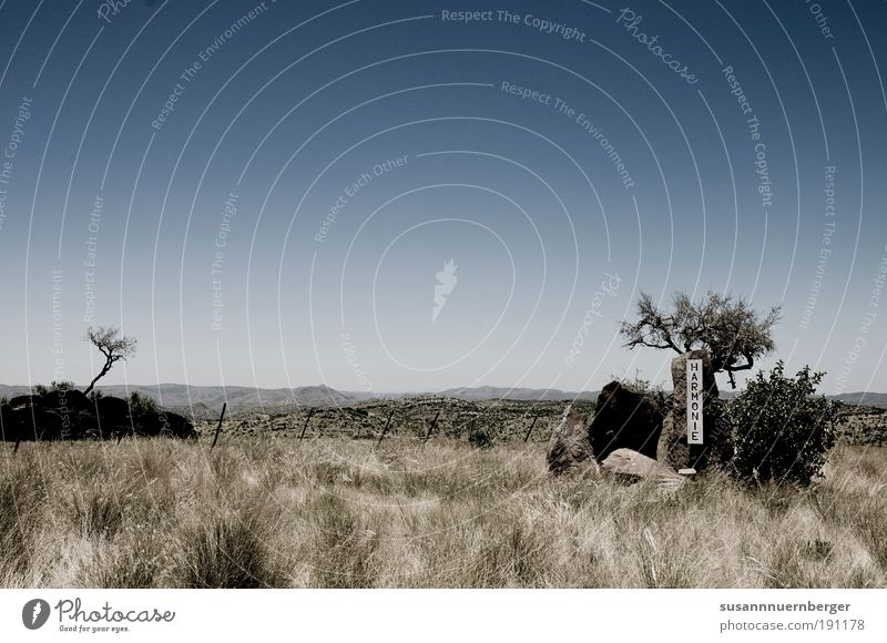Namibia - thelandofbrave Environment Nature Landscape Plant Animal Cloudless sky Summer Beautiful weather Wild plant Exotic Savannah Contentment Agreed Calm