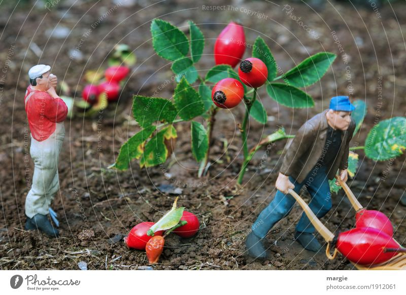 Miniwelten - Rose Hip Harvest Gardening Agriculture Forestry Services Human being Masculine Man Adults 2 Plant Tree Leaf Blossom Green Red Rose hip Fruit