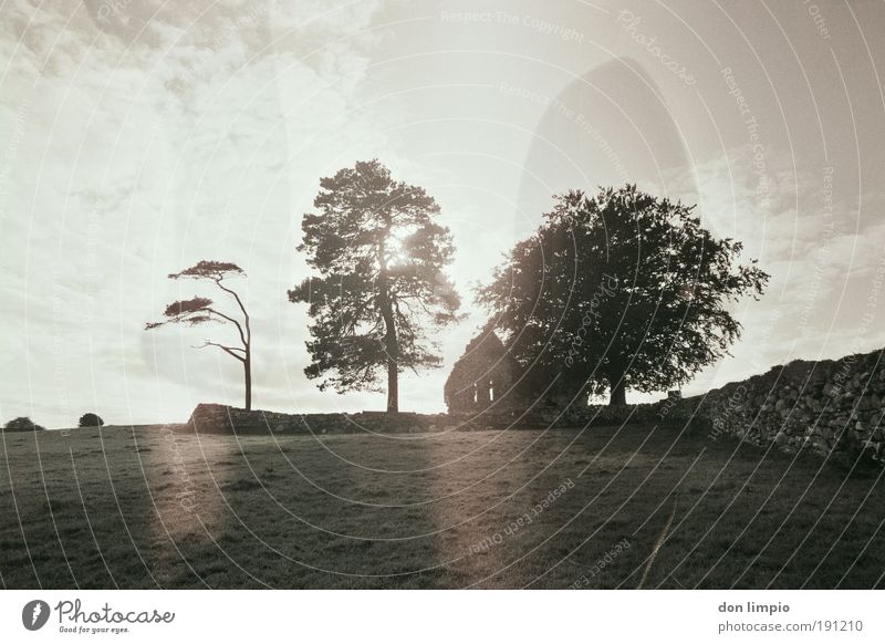 black tea Calm Summer House (Residential Structure) Clouds Sunlight Tree Meadow Field Ireland Village Deserted Ruin Church Wall (barrier) Wall (building) Old