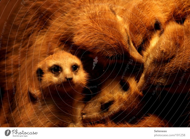 Nature Animal Love Environment Small Funny Baby animal Together Wild animal Group of animals Soft Cute Cleaning Observe Curiosity Animal face