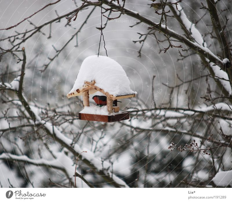 roof over one's head Ice Frost Snow Bird 1 Animal Crouch Cold Protection Birdhouse Colour photo Exterior shot Day Protection against the cold Deserted