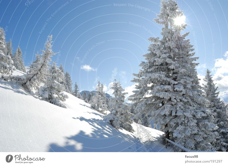 winter's tale Environment Nature Landscape Sky Clouds Sun Winter Beautiful weather Snow Tree Forest Alps Mountain Snowcapped peak Loneliness Relaxation