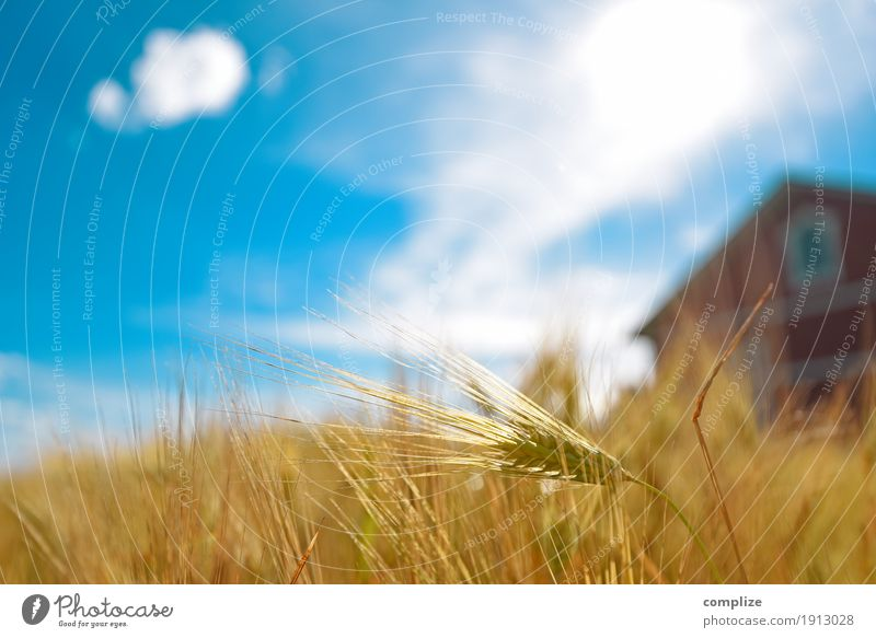 Sky Nature Plant Summer Healthy Eating Sun Environment Life Food Flat (apartment) Weather Field Nutrition Idyll Beautiful weather