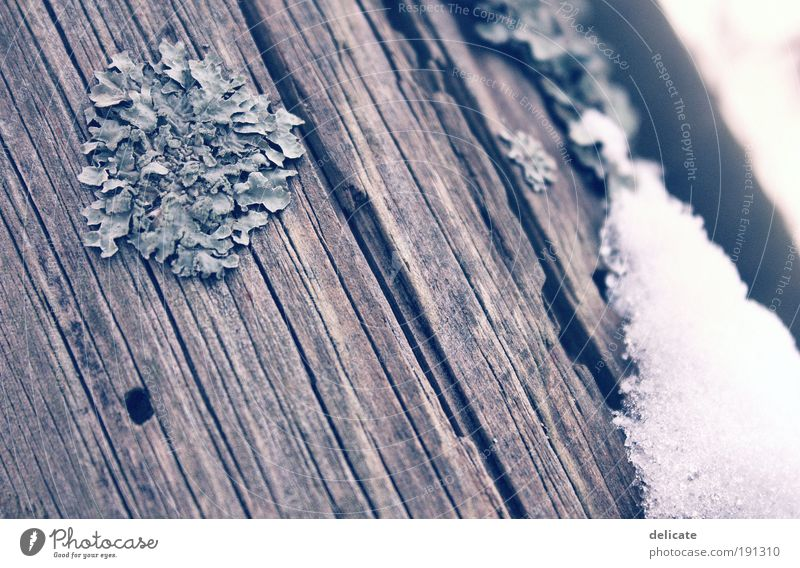 WoodnSnow Winter Ice Frost Blue Brown Gray White Subdued colour Exterior shot Macro (Extreme close-up) Deserted