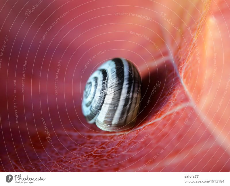 transience Environment Nature Autumn Plant Leaf Snail Snail shell 1 Animal Esthetic Natural Gray Orange Red Calm Design Loneliness Uniqueness Transience Time