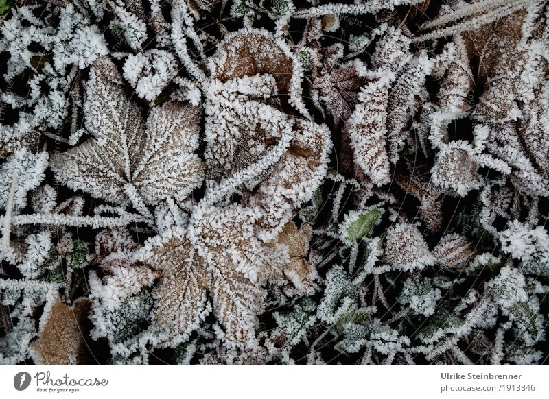 Nature Plant Leaf Winter Environment Cold Meadow Natural Garden Park Weather Glittering Lie Ice Frost Stalk