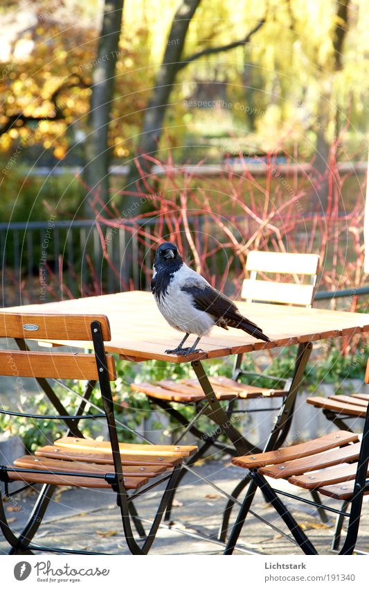 Nature City Tree Animal Black Cold Environment Garden Gray Dream Park Religion and faith Germany Bird Wild animal Europe