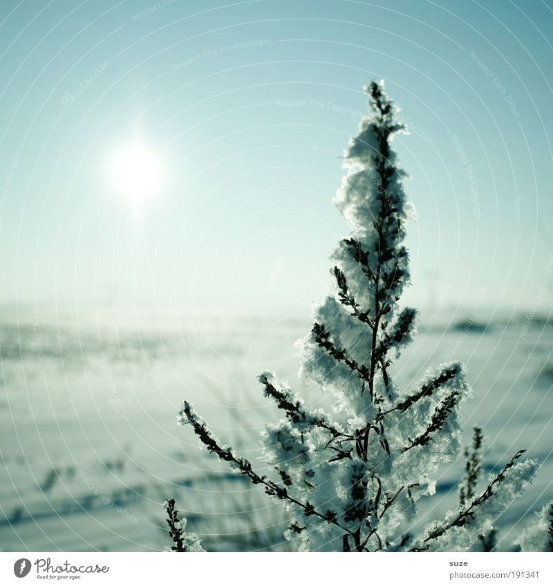 winter sun Sun Environment Nature Landscape Plant Elements Air Horizon Winter Ice Frost Snow Authentic Cold Natural Beautiful Blue Loneliness Pure Ice age