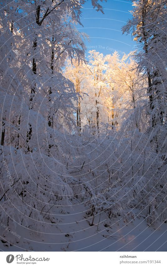 Nature White Sun Tree Landscape Calm Winter Forest Cold Snow Dream Frost Seasons Frozen Snowscape Hoar frost