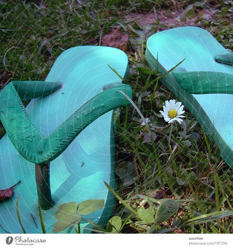 Nature Vacation & Travel Summer Meadow Grass Lake Fashion Happiness Plastic Beautiful weather Joie de vivre (Vitality) Daisy Flower Flip-flops Footwear Joy