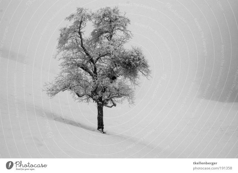 winter never ends Nature Water Winter Bad weather Fog Ice Frost Snow Tree Meadow Freeze Cold Natural Gloomy Gray Black White Dream Longing Loneliness Branch