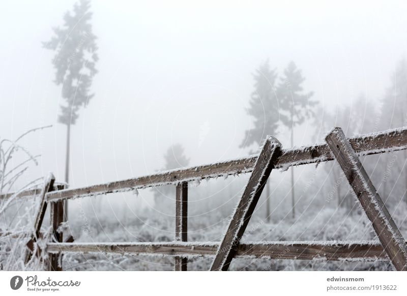 chill Winter Hiking Nature Fog Ice Frost Tree Wild plant Field Forest Wood Fence Discover Freeze Going Looking Firm Cold Natural Colour photo Exterior shot